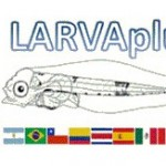 larva plus